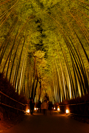 blog-phot-hanatouro1.jpg
