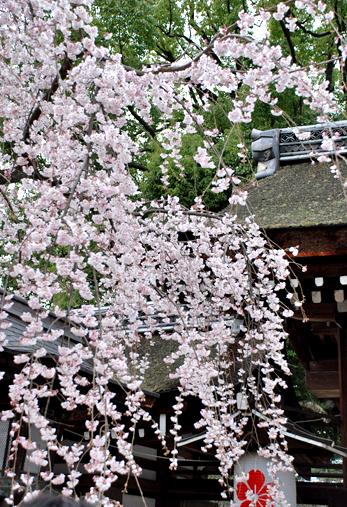 blog-phot-sakura1.jpg