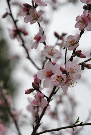 blog-phot-sakura2.jpg